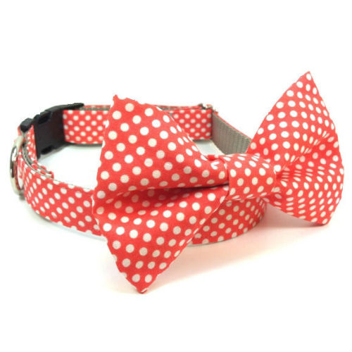 Bow Tie Dog Collar & Leash Tangerine Polka Dots
