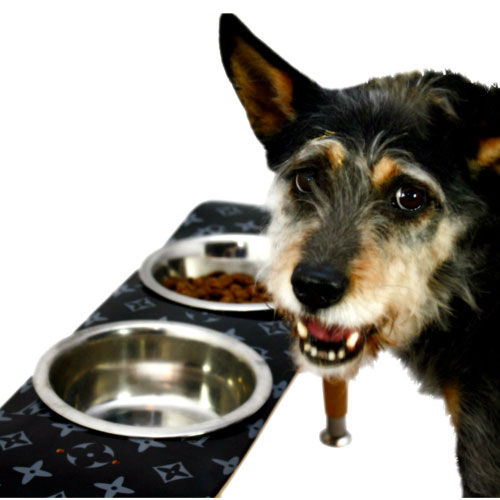 Skateboard Elevated Pet Bowl Vuitton