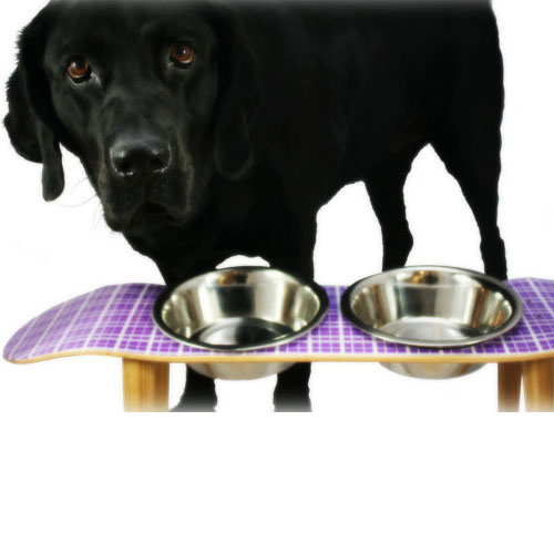 Skateboard Elevated Pet Bowl Purple or Teal Plaid