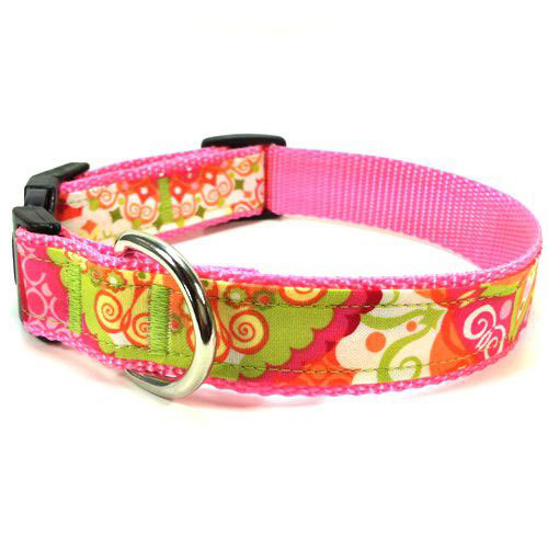 California Dreaming Collar & Leash