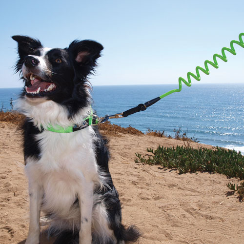 Tangle-Free Jumbo Coil Leash in 6 Colors