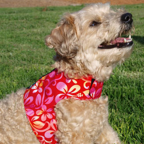 Reversible Flower-Power Dog Harness